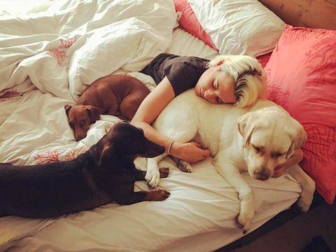 Dog, Canidae, Companion dog, Puppy love, Puppy, Dog breed, Nap, Love, Sleep, Human,