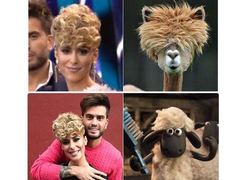 Hair, Head, Wildlife, Organism, Human, Lion, Llama, Smile, Photography, Selfie,