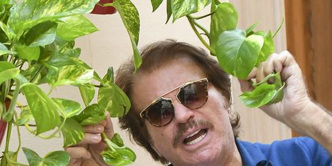 Eyewear, Glasses, Leaf, Plant, Houseplant, Botany, Basil, Flower, Gesture, Herb,