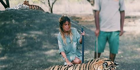 Tiger, Human, Bengal tiger, Siberian tiger, Vertebrate, Big cats, Felidae, Carnivore, Adaptation, Terrestrial animal,