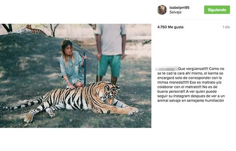 Tiger, Bengal tiger, Big cats, Organism, Felidae, Siberian tiger, Vertebrate, Carnivore, Adaptation, Terrestrial animal,