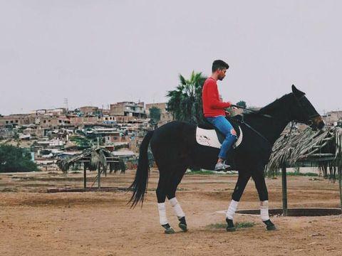 Human, Shoe, Horse supplies, Vertebrate, Horse, Halter, Bridle, Horse tack, Working animal, Equestrianism,