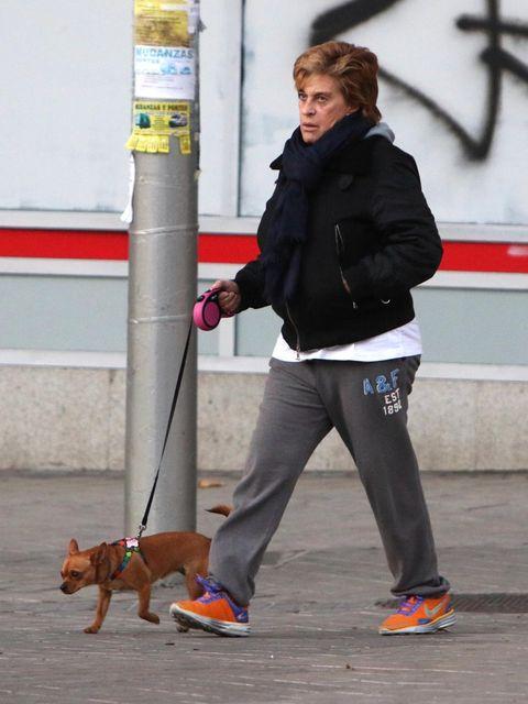 Dog, Canidae, Dog walking, Leash, Companion dog, Dog breed, Sporting Group, Carnivore, Walking,