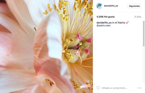 Petal, Yellow, Flower, Pink, Peach, Botany, Orange, Flowering plant, Close-up, Wildflower,