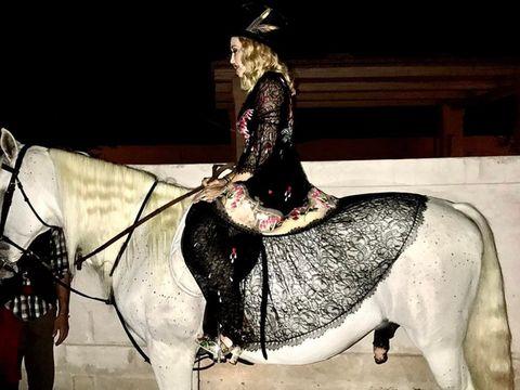 Horse, Bridle, Horse tack, Rein, Halter, Horse supplies, Working animal, Headgear, Liver, Livestock,