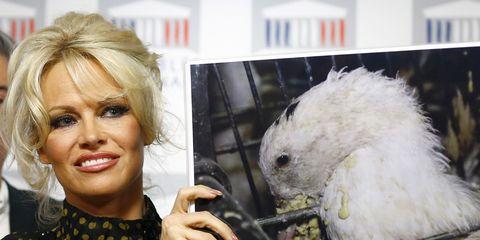 Nose, Bird, Hand, Parrot, Eyelash, Beak, Cockatoo, Blond, Makeover, Sulphur-crested cockatoo,