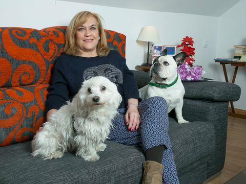 Dog, Carnivore, Vertebrate, Dog breed, Mammal, Furniture, Room, Interior design, Couch, Living room,