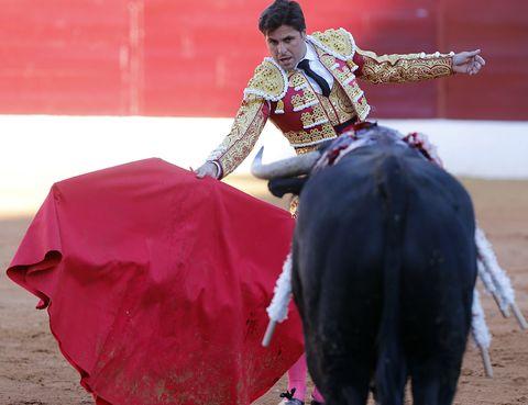 Matador, Bull, Sport venue, Entertainment, Performing arts, Event, Bullring, Bullfighting, Bovine, Animal sports,