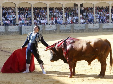 Bull, Animal sports, Mammal, Bullfighting, Matador, Bovine, Sport venue, Vertebrate, Bullring, Entertainment,