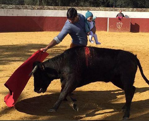 Human, Bull, Organism, Vertebrate, Bovine, Red, Bullring, Animal sports, Interaction, Carmine,
