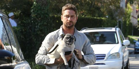 Dog breed, Carnivore, Dog, Windshield, Hood, Vehicle door, Denim, Companion dog, Automotive window part, Toy dog,