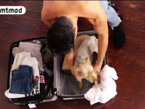 Dog breed, Cat, Puppy, Leg, Suitcase, Sporting Group, Felidae,