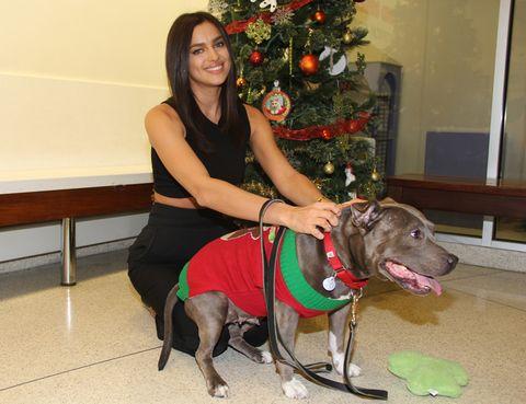 Dog breed, Collar, Dog, Carnivore, Holiday, Leash, Sporting Group, Sitting, Christmas tree, Christmas decoration,