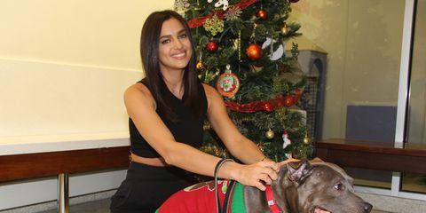 Human, Dog breed, Collar, Dog, Carnivore, Floor, Holiday, Leash, Christmas decoration, Dog collar,