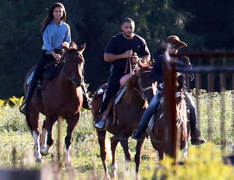 Human, Bridle, Horse supplies, Halter, Vertebrate, Recreation, Horse, Working animal, Saddle, Horse tack,