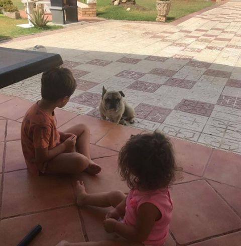 Play, Child, Canidae, Cat, Floor, Carnivore, Companion dog, Flooring, Felidae, Fawn,