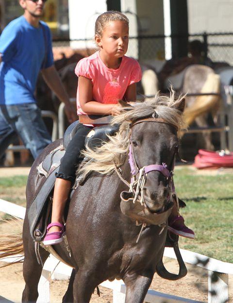 Human, Horse supplies, Vertebrate, Halter, Bridle, Horse, Working animal, Shoe, Rein, Saddle,