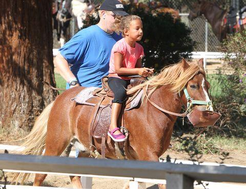Human, Horse supplies, Bridle, Halter, Vertebrate, Horse, Shoe, Rein, Saddle, Horse tack,
