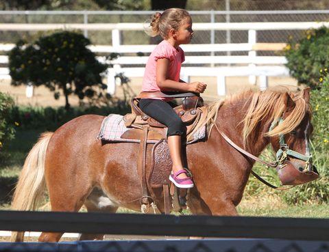 Human, Halter, Shoe, Horse supplies, Horse, Bridle, Vertebrate, Horse tack, Saddle, Mammal,