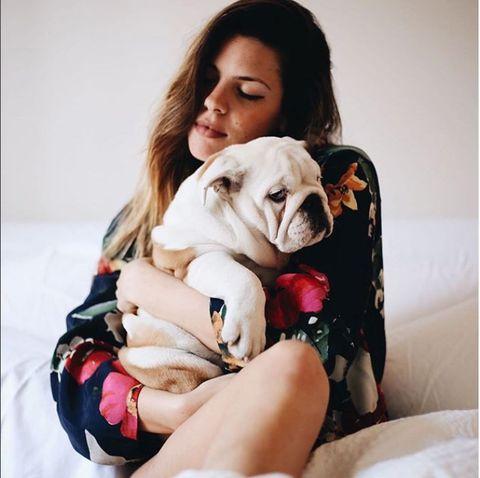 Carnivore, Dog, Comfort, Dog breed, Wrinkle, Toy dog, Companion dog, Fawn, Working animal, Bulldog,