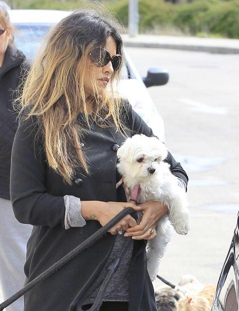 Eyewear, Human, Vision care, Dog breed, Dog, Mammal, Carnivore, Sunglasses, Terrier, Companion dog,