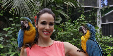 Parrot, Nature, Blue, Bird, Vertebrate, Yellow, Beak, Macaw, Iris, Adaptation,