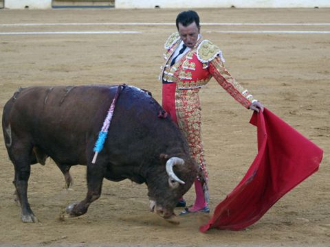Matador, Bullfighting, Animal sports, Mammal, Bull, Sport venue, Vertebrate, Bovine, Bullring, Entertainment,