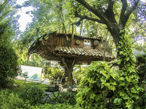 Vegetation, Garden, Tree house, Shrub, Outdoor table, Trunk, Shade, Outdoor furniture, Yard, Backyard,