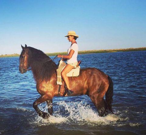 Horse, Equestrianism, Rein, Bridle, Trail riding, Halter, Outdoor recreation, Recreation, Animal sports, Equestrian sport,