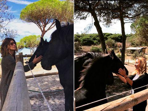 Horse, Sky, Tree, Stallion, Photography, Dress, Vacation, Landscape, Tourism, Mane,
