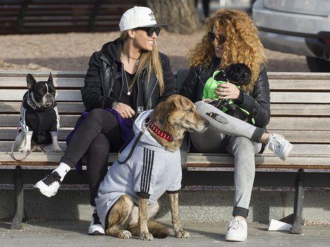 Clothing, Human, Leg, Dog breed, Vertebrate, Cap, Dog, Carnivore, Mammal, Collar,