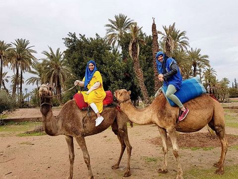 Camel, Human, Mode of transport, People, Camelid, Natural environment, Vertebrate, Landscape, Photograph, Tree,