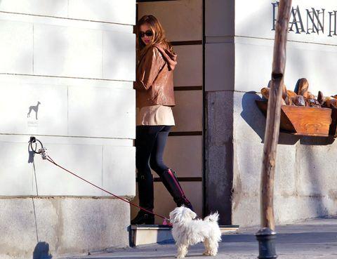 Dog breed, Dog, Carnivore, Denim, Terrier, Sunglasses, Street fashion, Leash, Bag, Small terrier,