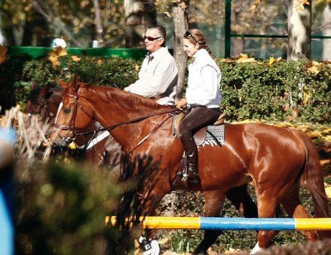 Bridle, Halter, Organism, Horse supplies, Vertebrate, Rein, Horse, Saddle, Horse tack, English riding,