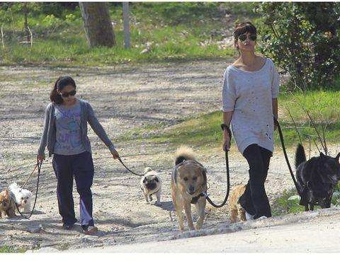 Human, Dog breed, Dog, Leash, Vertebrate, Carnivore, Mammal, Pet supply, Dog walking, Sporting Group,