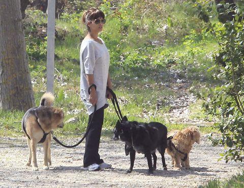 Human, Dog breed, Dog, Vertebrate, Carnivore, Mammal, Leash, Sunglasses, Sporting Group, Dog walking,