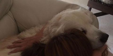 Dog breed, Comfort, Dog, Mammal, Carnivore, Wrist, Companion dog, Working animal, Nail, Dog supply,