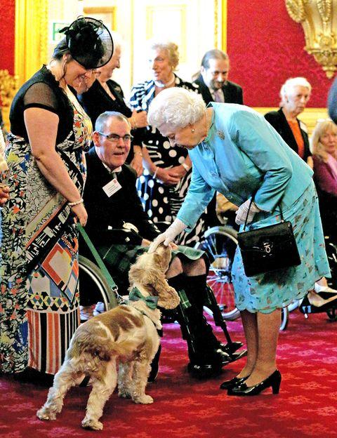 Human, Dog breed, Dog, Carnivore, Sporting Group, Fashion accessory, Leash, Fur, Companion dog, Canidae,