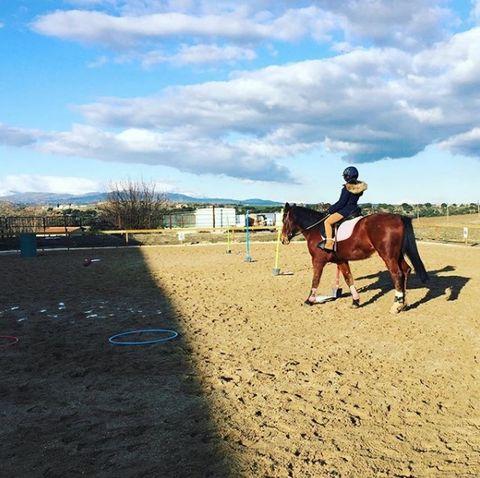 Horse, Horse supplies, Halter, Cloud, Bridle, Shoe, Horse tack, Working animal, Saddle, Rein,