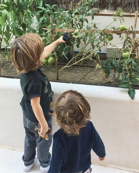 Child, Botany, Toddler, Tree, Plant, Leaf, Organism, Play, Adaptation, Houseplant,
