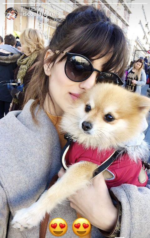 Dog, Mammal, Canidae, Pomeranian, Companion dog, Spitz, Dog breed, Eyewear, Puppy, Puppy love,