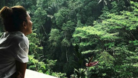 Vegetation, Nature, Forest, Jungle, Nature reserve, Natural environment, Rainforest, Valdivian temperate rain forest, Old-growth forest, Wilderness,