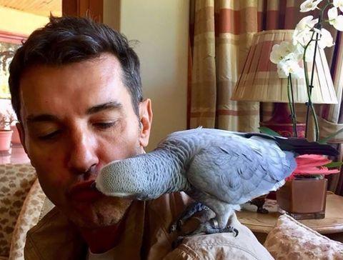 Parrot, Bird, Beak, Vertebrate, african grey, Feather, Wing, Bird of prey, Claw, Cockatoo,