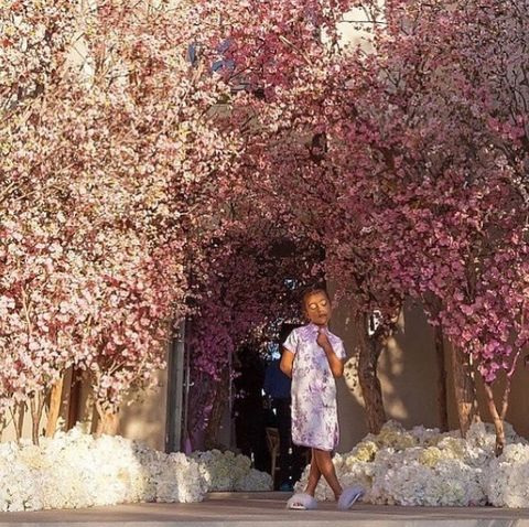 Flower, Tree, Spring, Pink, Blossom, Cherry blossom, Plant, Woody plant, Branch, Leisure,