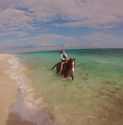 Horse, Working animal, Vacation, Ocean, Sorrel, Trail riding, Sea, Beach, Aqua, Horse supplies,