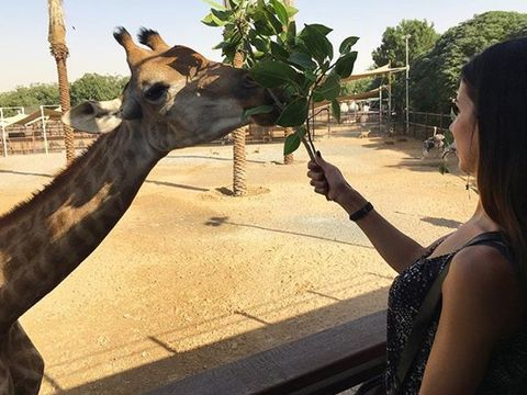 Skin, Giraffe, Vertebrate, Mammal, Giraffidae, Jaw, Adaptation, Terrestrial animal, Organ, Temple,