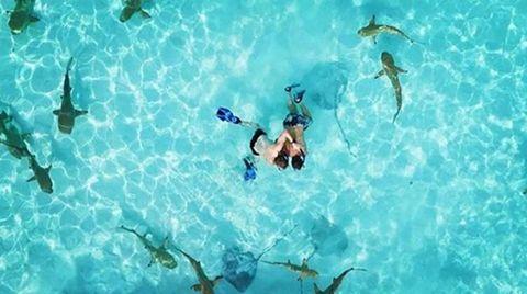 Organism, Fluid, Aqua, Turquoise, Teal, Leisure, Swimming pool, Azure, Underwater diving, Underwater,