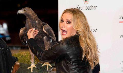 Bird, Accipitridae, Bird of prey, Beak, Accipitriformes, Wing, Falconiformes, Logo, Eagle, Hawk,