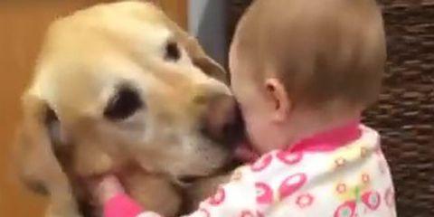 Dog breed, Dog, Carnivore, Vertebrate, Mammal, Pink, Baby & toddler clothing, Child, Interaction, Logo,