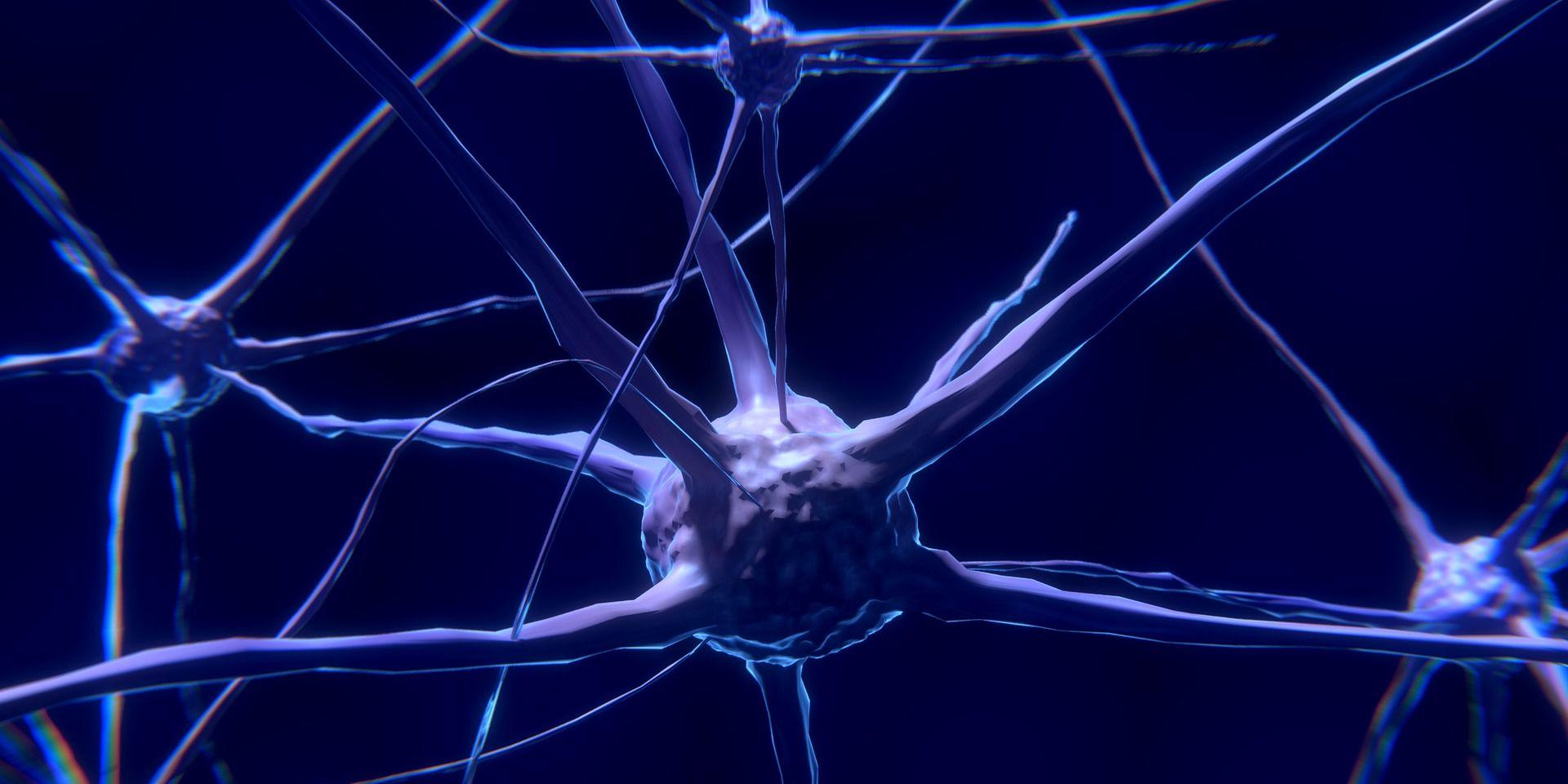 Descubren la señal cerebral que revela que hemos entendido una frase
